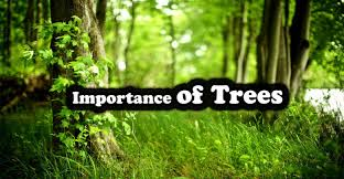 importance of trees in our life essay in english the college study importance of trees in our life essay in english