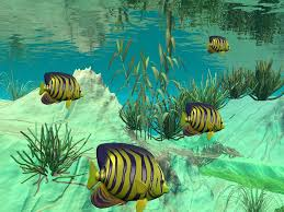 3d fish wallpaper. Interesting Fish Inside 3d Fish Wallpaper E