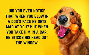 Funny Dog Quotes Text Image Quotes Quotereel