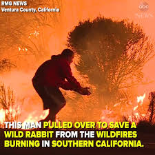 Image result for california fires man saves bunny news