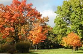 photo courtesy of friends of boerner botanical gardens