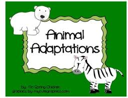 Animal Activity Chart Animal Adaptations Cut And Paste Chart Camouflage Activity Quiz