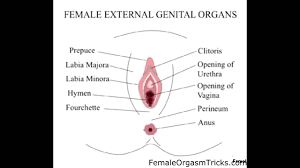 Give a female an orgasm squirt