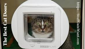 the 11 best cat doors of 2021 in out