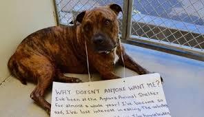 animal shelters sad. Wonderful Sad Brokenhearted Shelter Dog Stops Eating Because No One Wants Him  The Dodo To Animal Shelters Sad R