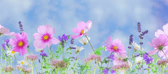 Image result for spring flower