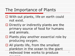Importances Of Plants New Chapter Ppt Video Online Download Inspiration  Design