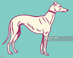 Greyhound Dog High-Res Vector Graphic ...