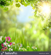 Nature backgrounds Aesthetic Featurepicscom Meadow Natural Background