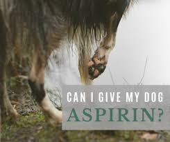 Baby Aspirin For Dogs Dosage Chart Can I Give My Dog Aspirin For A Limp Uses For Aspirin In