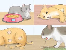 How To Reduce Fever In Cats 12 Steps With Pictures Wikihow