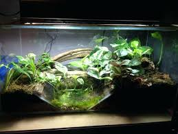how to build a vivarium fire belly toad tank setup new big build would love some how to build a vivarium