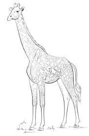 Masai Giraf Kleurplaat Gratis Kleurplaten Printen