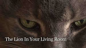 For Your Living Room The Lion In Your Living Room Teaser Youtube