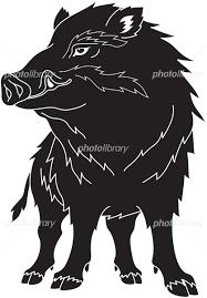 猪 正面 イラスト素材 5708628 フォトライブラリー Photolibrary