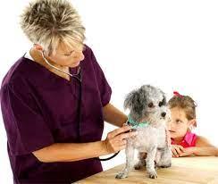 Medico veterinario - Imagui