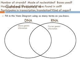Venn Diagram Of Transcription And Translation Venn Diagram Dna Rna Resume Examples Resume Template