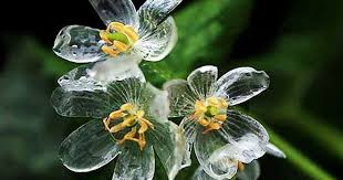 skeleton flowers bee transpa when it rains bored panda