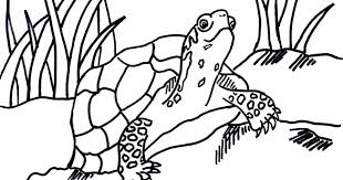 Small Picture Box Turtle Coloring Page Samantha Bell