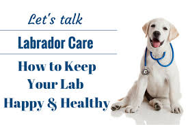 caring for a retriever a lab puppy as a vet