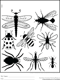 insect coloring pages printable insects of free p sheets garden page preschool pag insect coloring pages
