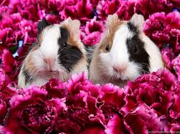 cute animal wallpapers high resolution. On Cute Animal Wallpapers High Resolution