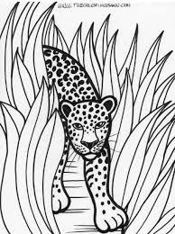 Small Picture Rainforest Printable Coloring Pages New Animals Coloring Pages