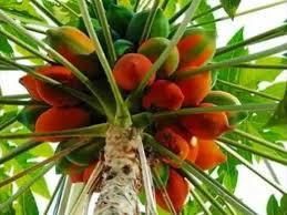Tips To Grow Cherries In Your Garden  Kerala Latest News  Kerala Kerala Fruit Trees