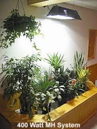 lighting for houseplants. MH Plant Grow Light - ACF Lighting For Houseplants L