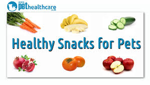 healthy snacks for your pets pethealthcare co za healthy snacks for pets regesondheid animal health pet insurance re versekering
