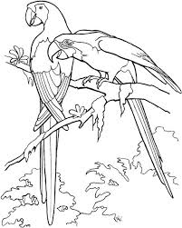 Small Picture Amazon rainforest coloring pages toucan bird ColoringStar