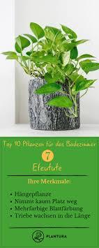 Pflanzen Fürs Badezimmer Unsere Top 10 Topfpflanzen Herbs Bath