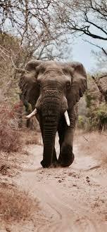 Elephant - iPhone Wallpapers art: Free ...