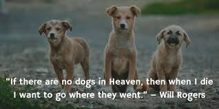 Dog Quotes Inspirational New Dog Gone 48 Inspirational Quotes About Losing A Dog Terribly Terrier