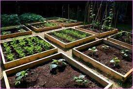Small Picture Raised Garden Beds Design Home Design Ideas