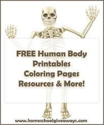 Small Picture FREE human anatomy printables you may enjoy coloring pages