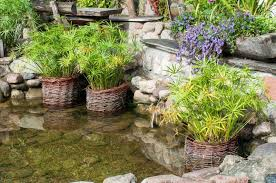 points of interest natural stone pond woven rattan basket planters stone ledges diy wooden bench wooden window box planter teeming with