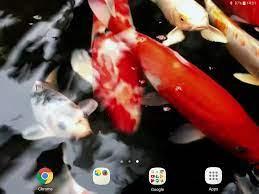 Koi Live Wallpaper PRO für Android ...