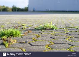 Weeds Growing Out Of Paved Roadway Stock Photo 9760850 Alamy