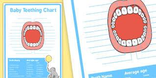 Baby Teething Chart Baby Teeth Teething Baby Teeth