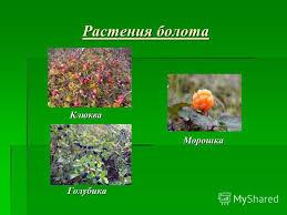 Животный Мир Болот Беларуси Реферат