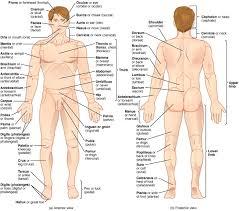 Men Body Chart Human Body Part Chart Directional Anatomy Men Body Parts