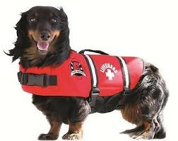 Obrien Neoprene Pet Vest Swimming And Boat Safety Neo Life