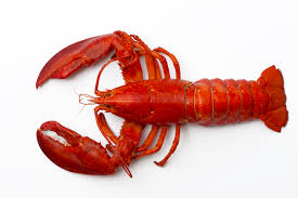 Outraged Maine: The Lobster Emoji ...