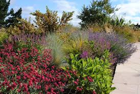 Small Picture Stylish and Sustainable Garden Design Eye of the Day Garden