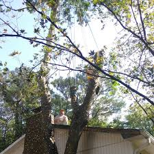 danielu0027s tree service u0026 lan daniels tree service35
