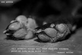dog-quotes-tumblr-4.jpg