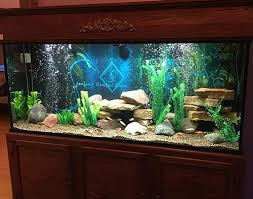aquarium office. Office Aquarium. Aquarium