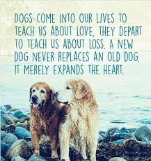 Dog Passing Quotes New Wwwdarwinspet Dog Quotations Group Pinterest Dog