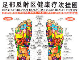 Ints Of Human Body Wall Chart Therapy Foot Reflection Health